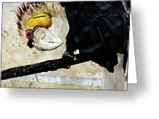 Wreathed Hornbill Perching Against Vintage Concrete Wall Backgro Greeting Card