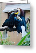 Wreathed Hornbills Greeting Card