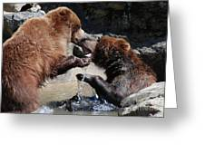 Wrestling Grizzly Bears In A Shallow River Greeting Card