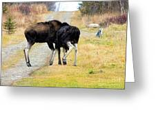 Amorous Moose Wrestling Greeting Card