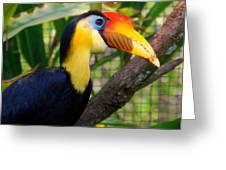 Wrinkled Hornbill Greeting Card