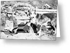 Wwi, Nell British Messenger Dog Greeting Card