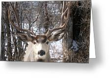 Wyoming Buck Greeting Card