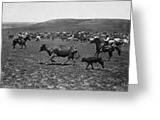 Wyoming: Cowboys, C1890 Greeting Card