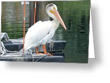 Wyoming Pelican Greeting Card