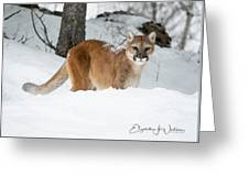 Wyoming Wild Cat Greeting Card