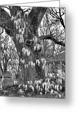 Wysteria Tree In Black And White Greeting Card