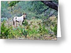 Horse0007 Greeting Card