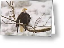 Yakama Canyon Eagle Greeting Card