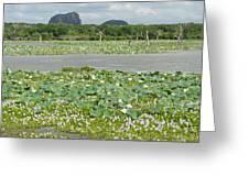 Yala National Park Greeting Card