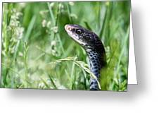 Yard Snake Greeting Card