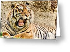 Yawning Bengal Tiger Greeting Card