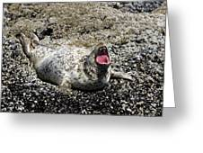 Yawning Harbor Seal - Oregon Coast Greeting Card