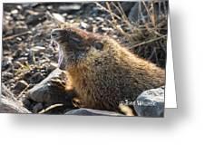 Yawning Marmot Greeting Card