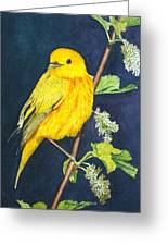 Yelllow Warbler Greeting Card