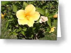 Yello Hibiscus Greeting Card