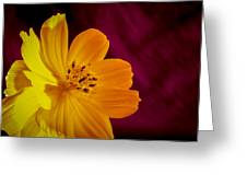 Yellow-1 Greeting Card