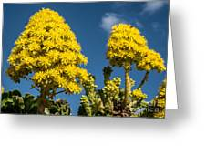 Yellow Aeonium Greeting Card