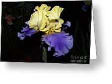Yellow And Blue Iris Greeting Card