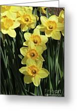 Yellow And Orange Daffodil  #2 Greeting Card
