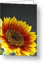 Yellow And Orange Gerber Greeting Card