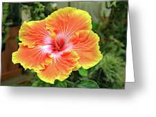 Yellow And Orange Hibiscus 2 Greeting Card