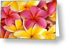 Yellow And Pink Greeting Card