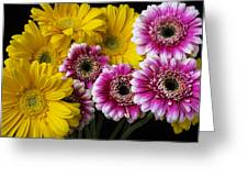 Yellow And Pink Gerbera Daisies Greeting Card