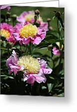 Yellow And Pink Peony Greeting Card