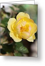 Yellow And Pink Tipped Rose Greeting Card