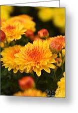 Yellow And Red Autumn Mums Closeup I Greeting Card