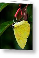Yellow And Red Greeting Card
