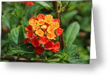 Yellow And Red Flowers On A Branch Greeting Card