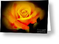 Yellow And Red Rose Greeting Card