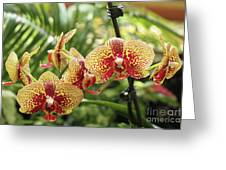 Yellow And Red Spotted Phalaenopsis Orchids Greeting Card