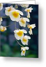 Yellow And White Cascading Flowers Greeting Card