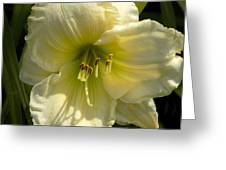 Yellow And White Daylily Greeting Card