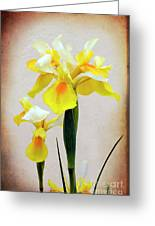 Yellow And White Iris Textured Greeting Card