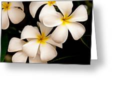 Yellow And White Plumeria Greeting Card