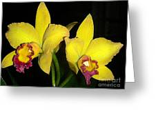 Yellow And Wine Orchids Greeting Card