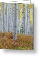 Yellow Aspen Grove Greeting Card