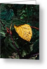 Yellow Autumn Leaf Greeting Card