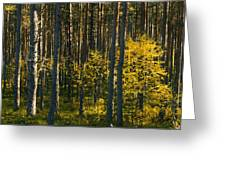 Yellow Autumn Trees In Forest Greeting Card