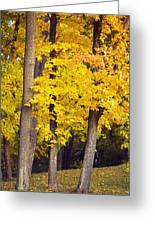 Yellow Autumn Trees Greeting Card