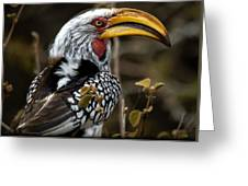 Yellow Beak Greeting Card