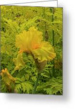 Yellow Bearded Iris Greeting Card