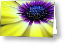 Yellow Beauty With A Hint Of Blue And Purple Greeting Card