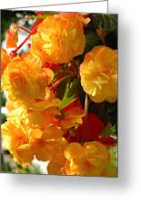 Yellow Begonia Flowers.  Victoria Greeting Card