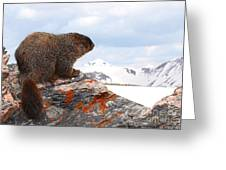 Yellow-bellied Marmot Enjoying The Mountain View Greeting Card