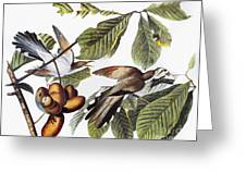 Yellow-billed Cuckoo Greeting Card